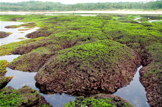北海岸麟山鼻的藻礁(廖運志攝)
