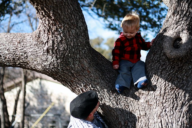 hey dad, I'm in a tree!