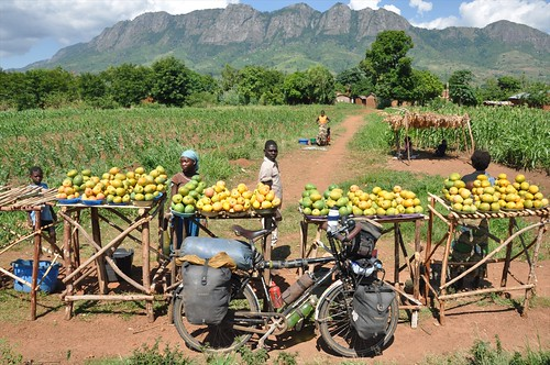More mangoes for sale