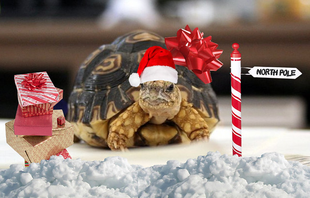 Happy holidays from Genbu
