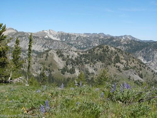 Summer Blossom/Summit Trail, Okanogan-Wenatchee National Forest, Washington