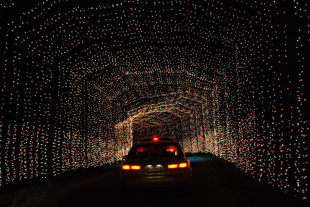 Texas Tech Christmas Lights