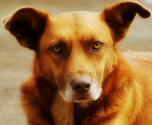 Um olhar cão