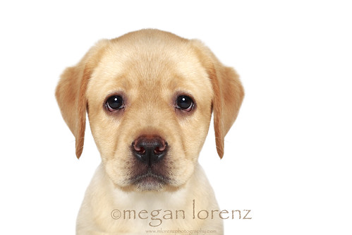 The Sad Puppy Face by Megan Lorenz