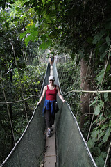 rainforest, suspension bridge, walking, canopy walkway, forest, rope bridge, jungle, bridge,