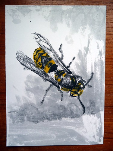 Vespula germanica: monoprint