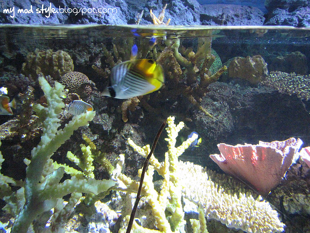 Denver Aquarium 4