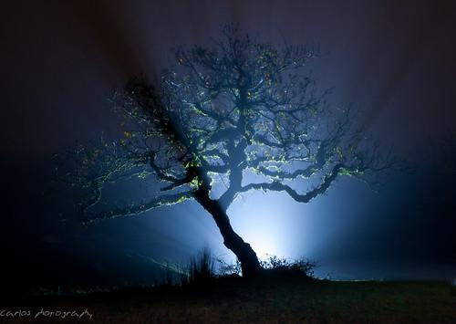 noche con niebla by carlos_d700