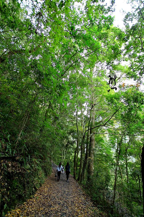 奧萬大國家森林遊樂區賞楓