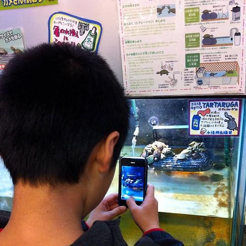誕生日プレゼントの亀をiPhone 3Gで撮影する息子。どれにしようかな〜