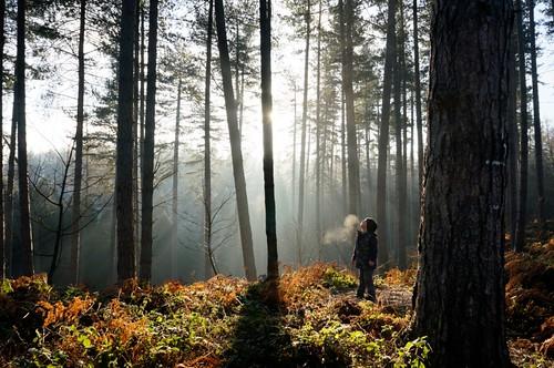 無料写真素材, 人物, 子供  男の子, 森林, 樹木, 薄明光線, 人物  見上げる, 人物  森林