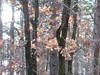 trasparenze di quercia