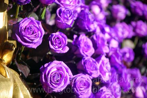 Las flores del Nazareno