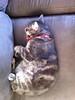 catman-sleeping-boulder