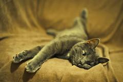 Iggy The Cat 02