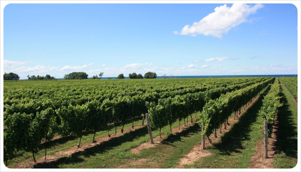 niagara wine country & lake