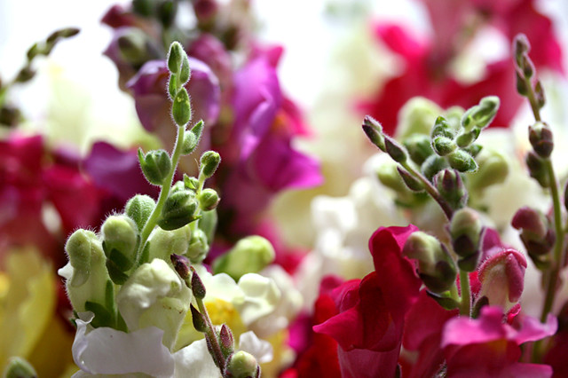 bright-flowers
