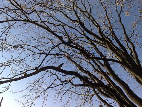 L'albero dei piccioni by durishti