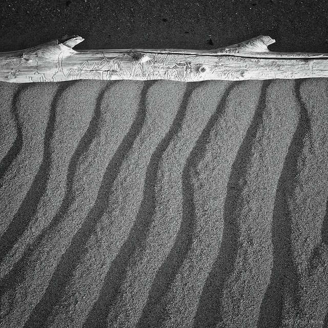 Log, sand. The Great Dunes