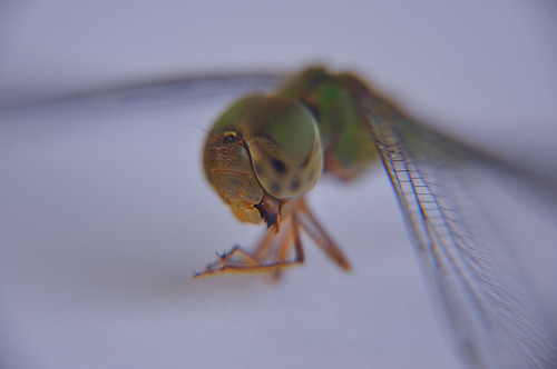 Libélula verde (01)