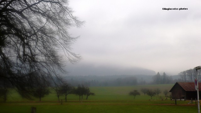 Field in Feldbrunnen in mist