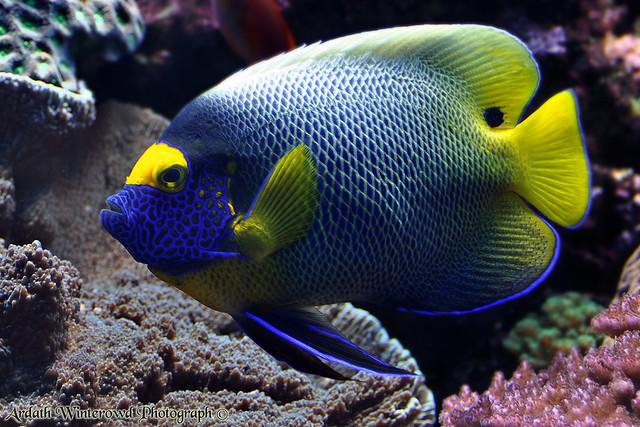 Blue Fish Birch Aquarium At Scripps Flickr Photo