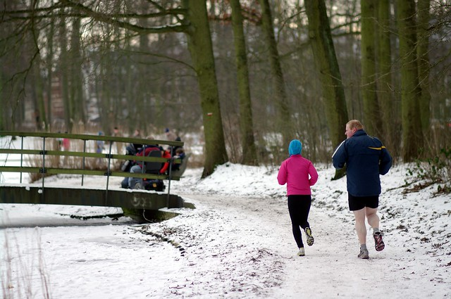 snowy Haagse Bos