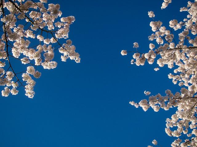 Spring in Salem-2.jpg