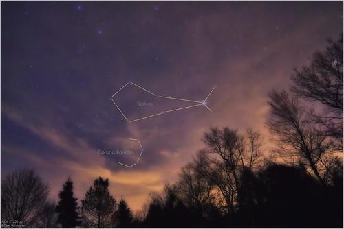 morning trees night clouds canon stars star evening corona astrophotography april astronomy nightsky constellation borealis 2014 arcturus skyglow samyang bootes tomwildoner