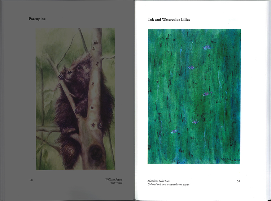 Publication: Ink and Watercolor Lilies, Owen Wister Riview 2015 _0002-shadowed-875