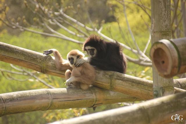 Besuch Tierpark Friedrichsfelde 17.04.201655