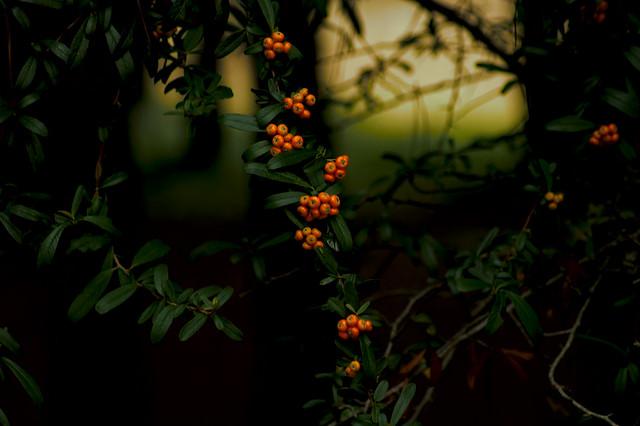 otoño8