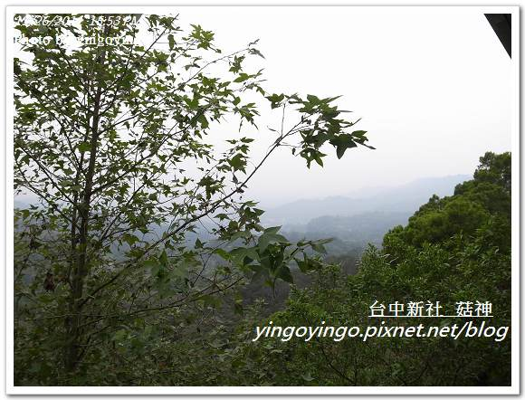 台中新社_菇神20111126_R0044207