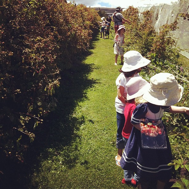 Berry picking with the natural learners co-op #unschooling #summer #friends