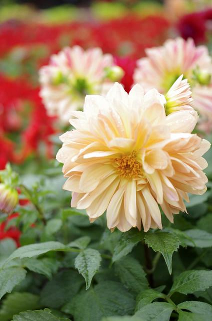 青年公園 台北花卉展