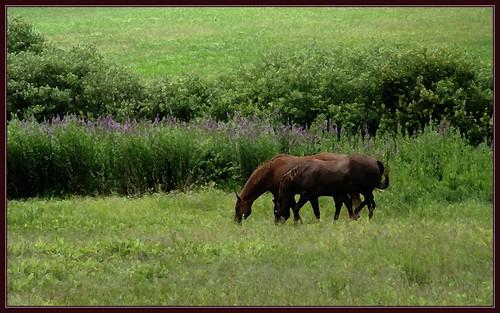 winter horse nature field spring seasons farm meadow equine westernmassachusetts bershires