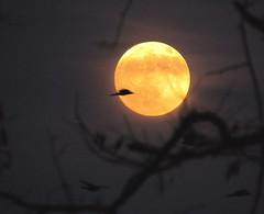 [フリー画像素材] 自然風景, 空, 夜空, 月 ID:201112182000