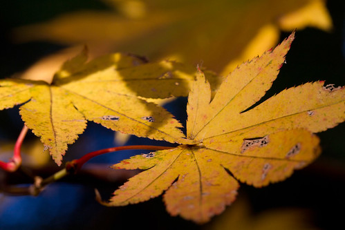 Autumn Leaves14