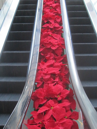 Red Poinsettas and Escalators