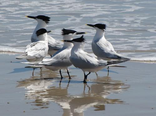 Tern, Tern, Tern by ricmcarthur