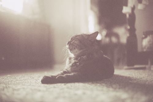 [フリー画像素材] 動物 1, 猫・ネコ ID:201112261200