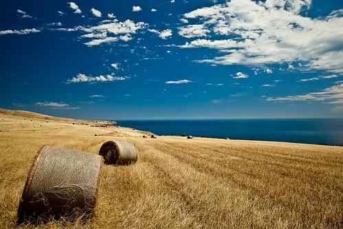 無料写真素材, 自然風景, 草原, 干し草, 風景  オーストラリア