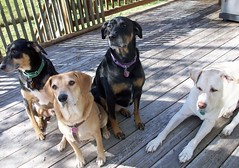 Outtakes_4Dogs_101611c