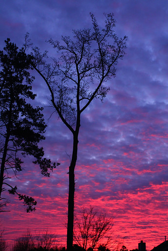 pink trees sky colors silhouette clouds sunrise colorful purple charlotte skyporn
