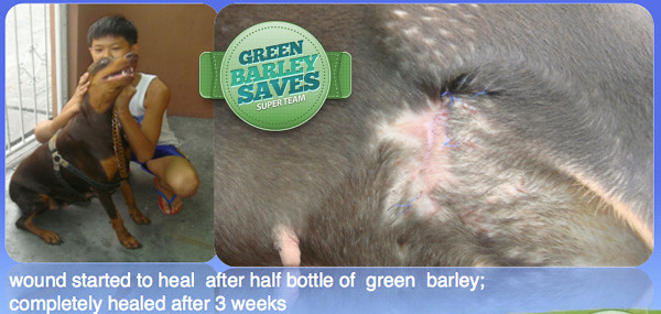 green barley testimonial on dog's tumor