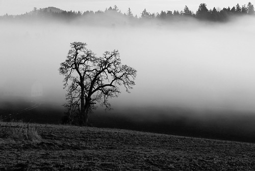 bw mist tree nature misty fog landscape evening lowlight day bc farm vancouverisland sidney