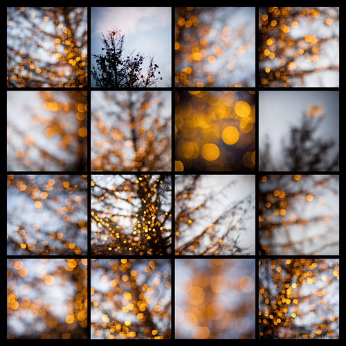 christmas blue orange holiday black tree yellow collage canon lights twilight published dof bokeh depthoffield canonef50mmf14usm canoneos40d dslrmag