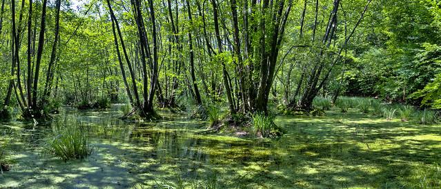 Fekete-tó
