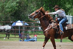 animal sports, rodeo, equestrianism, western riding, mare, stallion, equestrian sport, sports, western pleasure, reining, horse,
