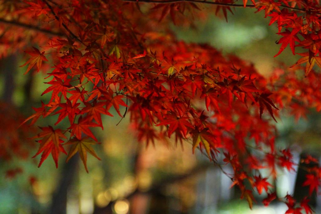 Kyoto Arashiyama tourist guide (8)